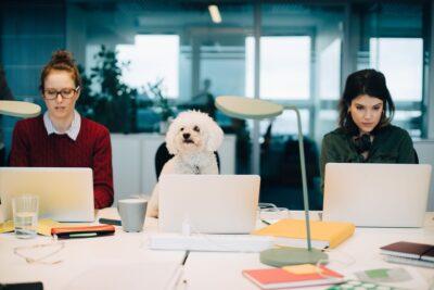 PC & Linnaeus - Dog at work